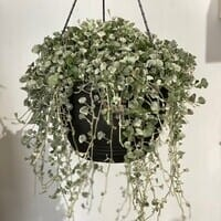 Garden Feast Hanging Basket
